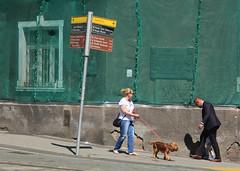 on seeing a dog (ƒliçkrwåy) Tags: poznan street man woman dog signpost