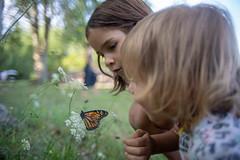 DSC03826 (dOOMZ) Tags: a7iii doomy gruia ontario sony wheatley vivitar 28mm f19 vivitar28mm19 sonya7iii butterfly canada
