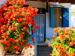 Facade with geranium (Marite2007) Tags: donoussa cyclades islands greece facade architecture blossoms gerania geranium colorful vivid red blue traditional pots spring vividstriking