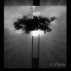 100805 fsp 180812 © Théthi (thethi (pls, read my 1st comment, tks a lot)) Tags: fenêtre vitre silhouette soleil plante intérieur bw c4 carré belgique belgium faves50 setbwsepia