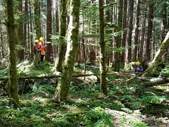 20180725-FS-Tongass-BM-002 (Tongass National Forest) Tags: vallenar ketchikan restoration younggrowth
