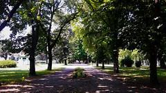 Hűs árnyak a kánikulában (Szombathely) (milankalman) Tags: green summer alley nature dark