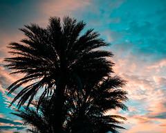 Atardecer en la playa de Aguadulce (fcojavier1991) Tags: skyporn skyline orangeteal sunset atardecer andalucía spain españa almería aguadulce nikond3300 nikon