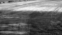 Sitting on the grass (dominmohedano) Tags: sitting landscape monochrome dresden river germany together couple love romanticism bw blackwhite