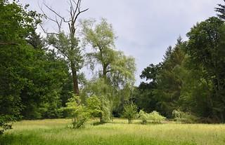 Im Baccumer Wald - Feuchtwiese; Lingen (15)