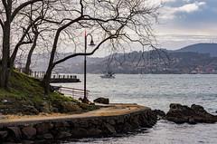A Punta(Teis)-_DSC2227 (peruchojr) Tags: aguía vigo apunta agua mar playa paseo bote barco árbol nwn