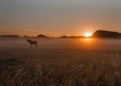 A day Ahead (Paul Calcutt) Tags: horse countryside field animal grass sunrise sky mist morning farm somerset paul calcutt sunset