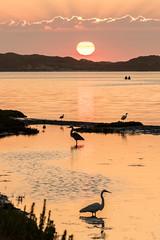 Birders Sunset (Ronda Hamm) Tags: 100400mkii california canon7dii morrobay bay birds clouds egret heron rays sunset water