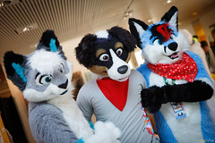 FOX_3298 (Kyoto Fox) Tags: kyu nook nfc nfc2018 nordicfuzzcon nordic fuzz con sweden furry fursuit fursuits upplandsväsby stockholmslän se
