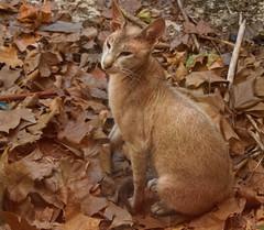 Le chat de la canicule - The cat of the heat wave (p.franche occupé - buzy) Tags: sony sonyalpha65 dxo photolab bruxelles brussel brussels belgium belgique belgïe europe pfranche pascalfranche schaerbeek schaarbeek cat chat