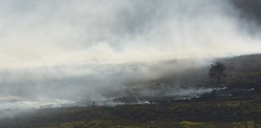 Smokin' (Tony Tooth) Tags: nikon d7100 nikkor 55300mm fire firemen firefighters smoke moors moorland heath heather theroaches upperhulme staffs staffordshire staffordshiremoorlands