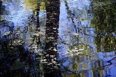 Reflections (setoboonhong) Tags: nature outdoor bendigo botanical garden tree foliage reflections sky colours bokeh blur abstract