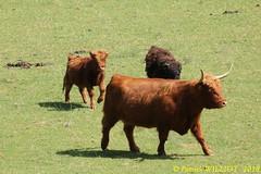 IMG_7420 (Patrick Williot) Tags: hansurlesse han lesse parc animalier safari