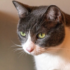javacatscafe12Aug20180387.jpg (fredstrobel) Tags: javacafecats javacatscafe atlanta places animals ga pets cats usa georgia unitedstates us