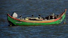 O barco e os viajantes da tormenta (Hugo Albuquerque) Tags: barco boats gaivota birds natureza nature naturaleza fantasticnature foto fotografiadenatureza fotografia rio rnet riotejo reservanatural tejo sitiodashortas alcochete