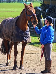 Nothing beats a chin tickle by Red Photography (julz.adams) Tags: canon aberdeenshire aberdeen remus equestrian equine rider photo photography horse ho thankyou
