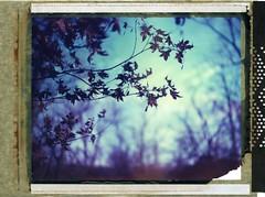 (er_code_blue) Tags: analog polaroidweek 4x5 film largeformat instant expired 59 polaroid crowngraphic graflex