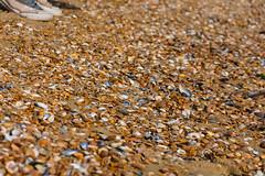 Shell's beach I. (rakkenrolcsi) Tags: belgium oostende city nikon d3400 sand beach shells