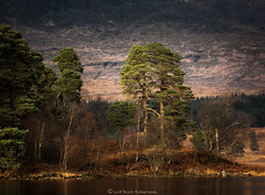 Little Lochan (Scott Robertson (Roksoff)) Tags: lochtulla rannochmoor glencoe bridgeoforchy scottishhighlands scotland lonetree landscape tree fence winter snow ice frost trees lochan water sky frozen outdoors nikond810 1635mmf4 70200mmf28 leefilters autumn scots pine
