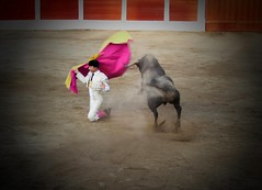 larga cambiada de rodillas (aficion2012) Tags: ceret céretdetoros francia france corrida bull bullfight tauromachie tauromaquia taureaux taureau matador toro torero toros toreador fraile gomez del pilar torear catalogne catalunya cataluña catalonia larga cambiada porta gayola capa capote