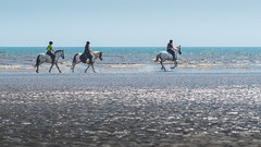 beach gallop.jpg (Stephen B Jessop) Tags: olympus beach england gallop fraisthorpe riders horses stephenbjessop em5mk2 riding sea