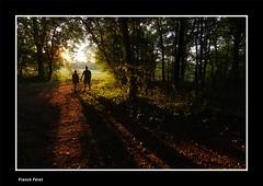 Lumière du soir dans la forêt - Abbans-Dessous (francky25) Tags: lumière du soir dans la forêt abbansdessous franchecomté doubs ambiance éstivale