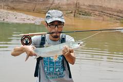 DSC_0241 (photogonia) Tags: ningyu catch caught yellowcheek carp 鳡鱼 fishing flyfishing tip bait cina hunan huaihua simms freshwater xiangxi lake