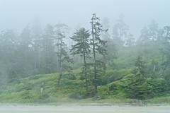 Misty Views, Long Beach, Vancouver Island, BC (Cwep) Tags: 2018 yeartaken canada pacificrimnationalparkreserve location longbeach vancouverisland britishcolumbia