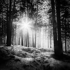 I am heading for the sun... (Alexander Tumashov) Tags: sun ray landscape nature recreation relaxation forest out town suburb fresh air chalet spring winter dawn sunrise lifestyle walk health healthy mood good mysterious target