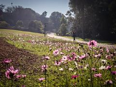 Late afternoon 9 (Mariasme) Tags: path wildflowers royalbotanicalgardens lateafternoon