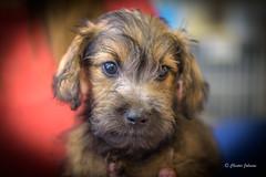 _DSC2786 (Chester Johnson) Tags: eddie dog pet puppy