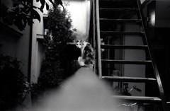三毛猫さん (taotti_01) Tags: canon canon7 jupiter8 lomography ladygrey400 film filmcamera cat bw blackandwhite monochrome rangefinder japan