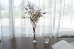 독서 (dhk0503) Tags: 꽃 카페 한적함 flowsrs cafe cozy stylus1 olympus study 독서