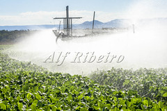 Alf 0047 - 0234 (Alf Ribeiro) Tags: agribusiness agriculture brazil brazilian economy rural soybean water agricultural bean blue business crop environment equipment farm farming farmland field green grow growth harvest industry irrigate irrigating irrigation land landscape leaves line liquid natural nature organic pivot plant production sky soil soy splash sprinkler supply system technology wet