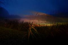 Dark days. (Bastiaan21) Tags: darkday textured biesbosch netherlands