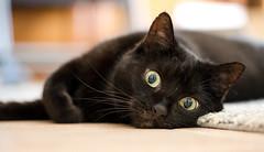 Lilli (rengawfalo) Tags: katze tier haustier animal cat pet augen auge eyes black schwarzekatze