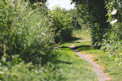 Titchmarsh Path (oandrews) Tags: 30dayswild canon canon70d canonuk footpath nature naturereserve northamptonshire outdoors path titchmarsh trail walk wildlifetrusts wildlifebcn aldwincle england unitedkingdom gb