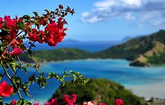 Bougainvillea (Sumarie Slabber) Tags: bougainvillea plants flowers philippines ocean sea landscape seascape sumarieslabber blue hills nature outdoors travel adventure nikon