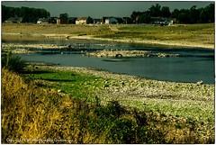 Grensmaas-5 (conrad.seegers) Tags: rivier maas grens belgie nederland grensscheidend fluss grenze veer voetveer pont bel vlag bedding droog