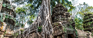 Roots Covering a Part of Structure at Ta Prohm Temple, Cambodia-39a
