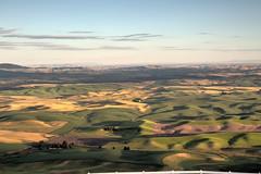Rolling Wheat Fields (Brad Prudhon) Tags: 2018july colfax farmland rollinghills steptoebutte wheatfields landscape scenic washington