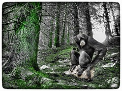 Virtual bestiary (tatianalovera) Tags: bestiary virtuale bestiario virtual fantastico fantasy italy italia trebulina piemonte piedmont africa gabon gibbone scimmia monkey albero bosco tree wood foresta forest parco park animale animal