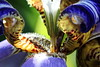 Détails pour un parfum suave d'Iris Bleu de Tahiti (Christian Chene Tahiti) Tags: paea tahiti jardin iris bleu corne color couleur feuille fleur fleurdepolynésie flore floredepolynésie fleurdesîles fleurdetahiti floredetahiti flores flower leave macro nature polynésie polynésiefrançaise vert blue fond pourpre purple canon 7d irisbleu bokeh extérieur jaune tacheté closer closeup macroorcloseup 7dwf 7dayswithflickr