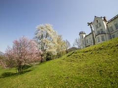 P4190023 (turbok) Tags: blüte gumpenstein kirschbaum landschaft nutzpflanzen pflanze c kurt krimberger