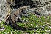 Audubon Zoo Revisit 9 (AaronP65 - Thnx for over 12 million views) Tags: neworleans zoo louisiana unitedstates us audubonzoo komododragon