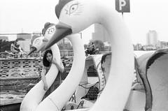 2018-04-20 19-03-52_3200 (loukilu) Tags: filmcamera filmphoto filmphotography filmcommunity filmfeed filmisnotdead filmisalive filmnerd iusefilm ilovefilm vietnam vietnamese hanoian hanoi analogphoto analogphotography hanoiyouth pentax
