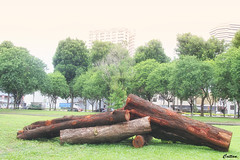 Artwork - Victoria Park, Singapore (cattan2011) Tags: logs traveltuesday travelphotography travelbloggers naturelovers natureperfection naturephotography nature victoriapark travel singapore 新加坡
