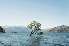 That tree in the middle of the lake (josemanuelerre) Tags: thatwanakatree mountain peak landscape blue wavy wave sky earth nature minimalism white antiquity ancient tree travel tourism experience valley cold winter green day light horizon dark natural explore shadow mountainous discover water riverbed rural snow border newzealand lake beauty intense scene brown huge forest wanaka wood sunset deep