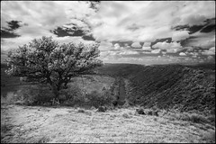 Another Look (zenseas) Tags: africa amakhalagamereserve gravesite wild workingholiday infrared workingvacation bushmansriver easterncape whiterhinoceros whiterhino southafrica vacation grave holiday ceratotheriumsimum ir digitalinfrared monochrome bw blackandwhite river poached memorial