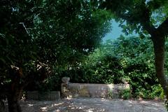 Un pò di fresco ed ombra !!! (dona(bluesea)) Tags: ombra shadow giardino garden marsala sicilia sicily